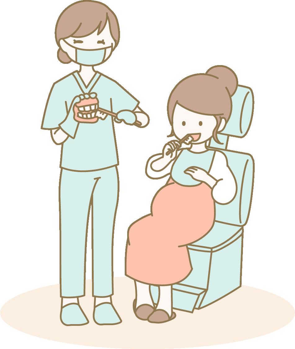 妊娠中 胎児期